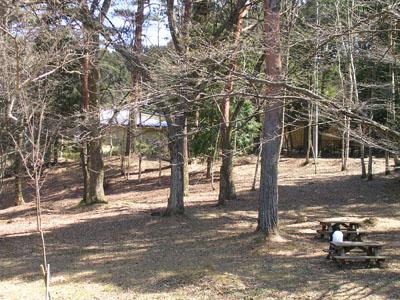 0904011大沼湖桜はつぼみ 008