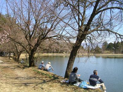 0904011大沼湖桜はつぼみ 002