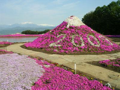 090509伊那の芝桜 006