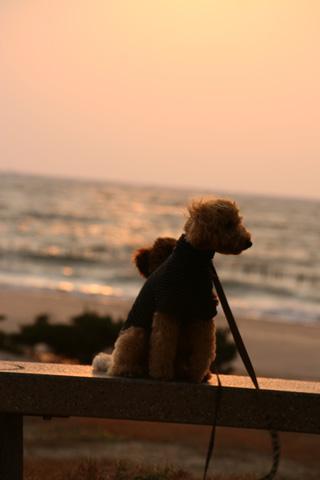 夕日。。。海を背に