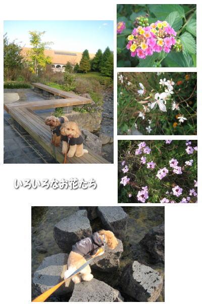 2007-11-10-6.jpg