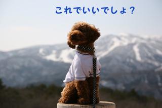 IMG_2528-320.jpg
