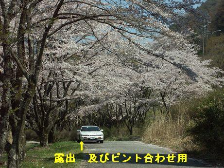 09apr12sakura2070.jpg