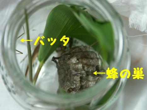 09june11033.jpg