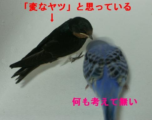 09june18028.jpg