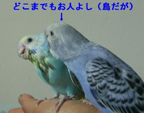 09june29006.jpg