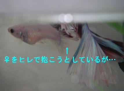 mar21014.jpg