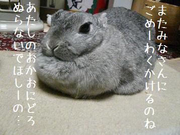 20070205_4.jpg