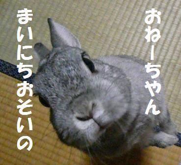 20071229_2.jpg