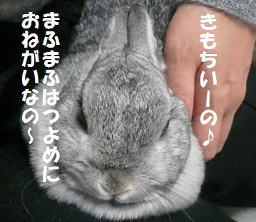 20080103_2.jpg