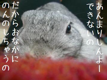 20080112_5.jpg