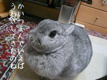 20080201_11.jpg