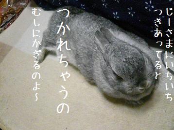20080214_4.jpg