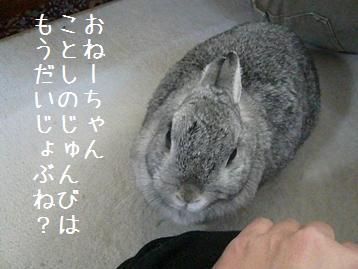 20080216_2.jpg