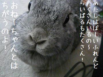 20080216_4.jpg