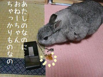 20080219_6.jpg