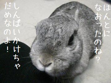 20080223_3.jpg