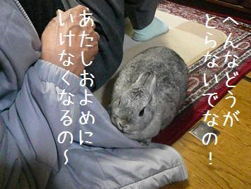 20080226_1.jpg