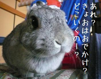 20080308_8.jpg