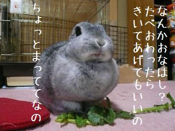 20080310_03.jpg