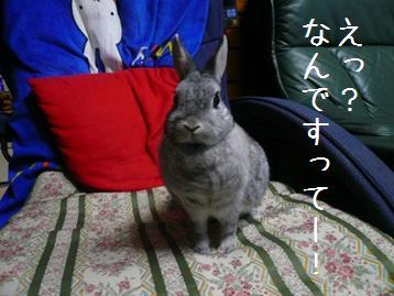 20080310_05.jpg