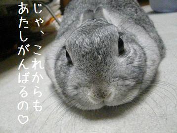 20080312_6.jpg