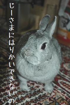 20080315_5.jpg