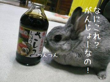 20080318_3.jpg