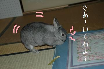 20080323_2.jpg