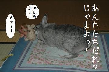 20080323_3.jpg
