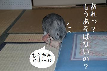 20080323_6.jpg