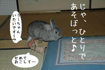 20080323_7.jpg