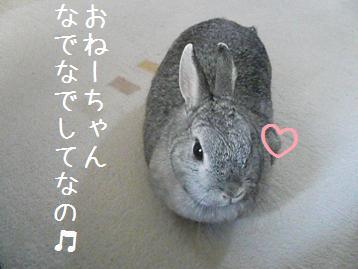 20080323_8.jpg