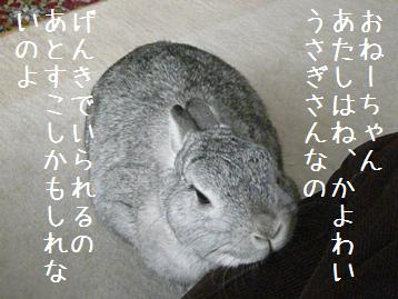 20080327_4.jpg