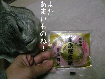 20080330_11.jpg