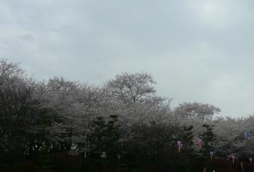 20080330_14.jpg