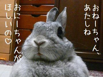 20080401_1.jpg