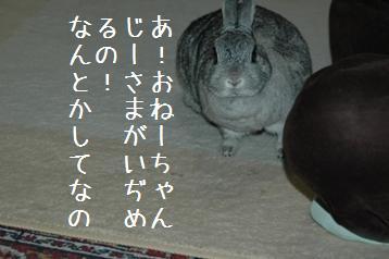 20080403_5.jpg