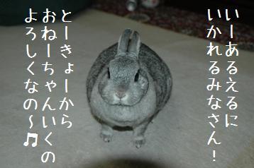 20080403_7.jpg