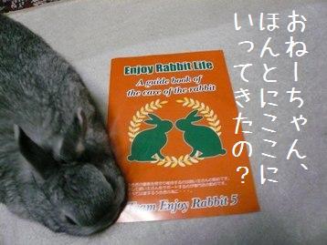 20080408_27.jpg