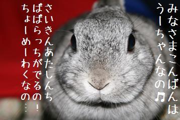 20080415_1.jpg
