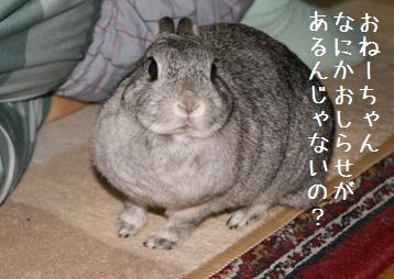 20080415_6.jpg