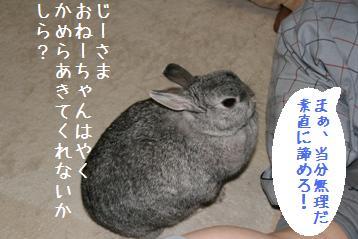20080415_9.jpg