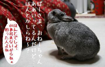 20080419_2.jpg