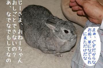 20080419_3.jpg
