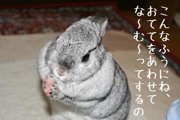 20080422_4.jpg