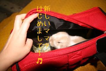 20080430_9.jpg