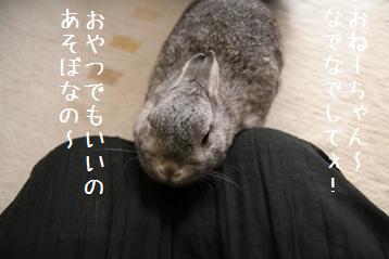 20080504_3.jpg