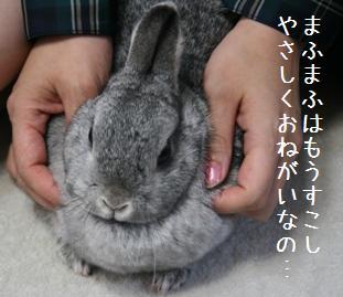 20080511_5.jpg