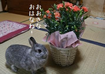 20080511_8.jpg